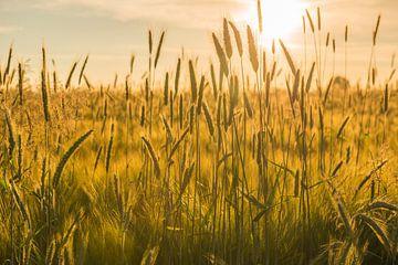 Graanveld met een ondergaande zon van Tonko Oosterink