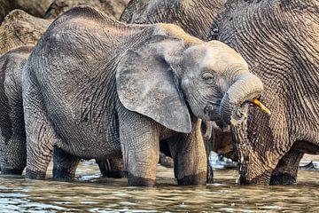 Jonge Olifant bij waterput van