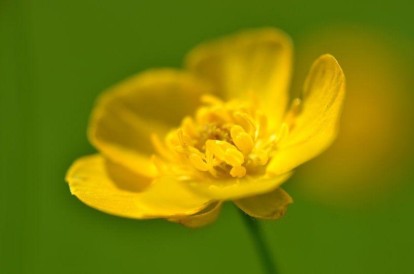 Gele bloem van Frank de Ridder