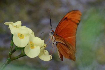 Vlinder van Paula van der Horst