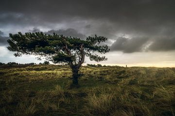 Het Noord Hollands duingebied van Klaas Fidom