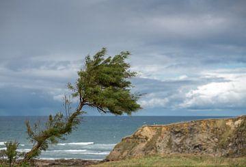 Scheefgewaaide boom in Comillas aan de Golf van Biskaye van Harrie Muis