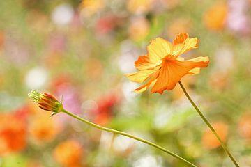 Mooie gele bloem in een groot zonovergoten veld van Tony Vingerhoets
