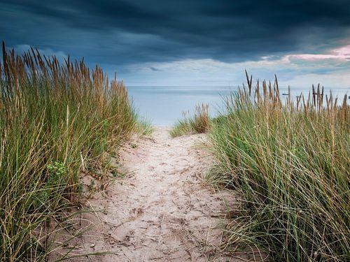 Zandpad door de duinen van