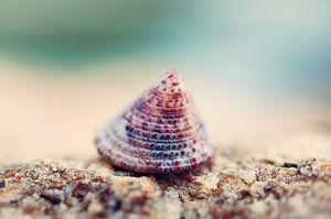 Schelp op strand van Bart van Woudenberg