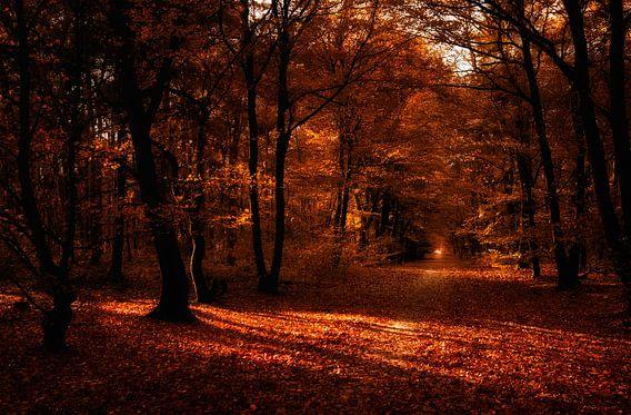 Herfstsfeer van Bas Mandos