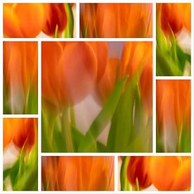 Tulpen | 9vaks-collage van Rob van der Pijll