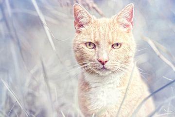 Tomcat Rouge sur Bob Daalder