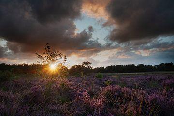 purple sunset van Jan Roelof Brinksma