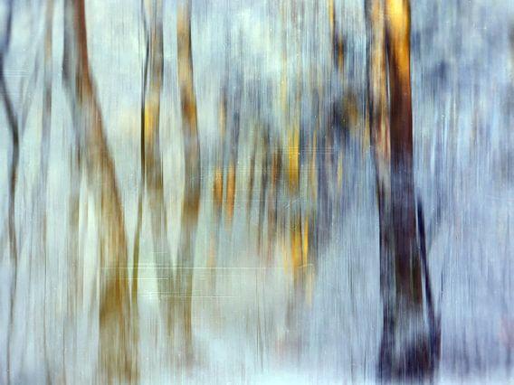 Magic winter trees 7