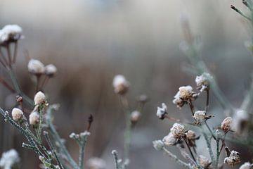Fleurs d'hiver sur Anthea van den Berg