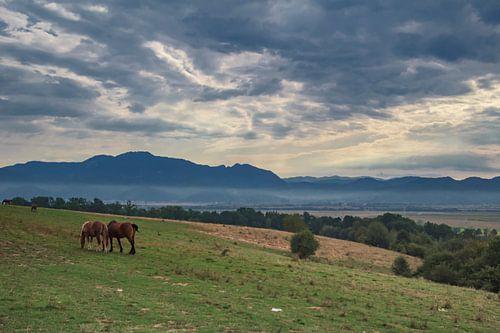 Landschap in het prachtige Transsylvanie van