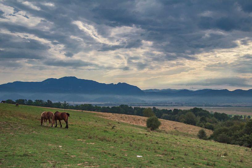 Landschap in het prachtige Transsylvanie van Steve Mestdagh