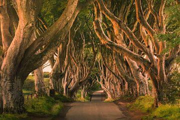 Die dunklen Hecken, Nordirland von Henk Meijer Photography