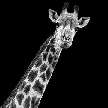 Porträt Giraffe in Schwarzweiß von Beeldpracht by Maaike