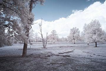 Infrarood landschap, witte bomen in een desolaat landschap van Gea Veenstra