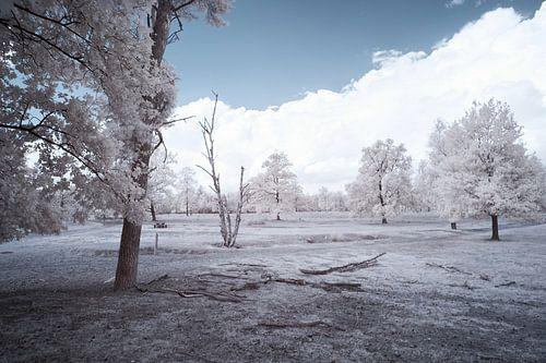 Infrarood landschap, witte bomen in een desolaat landschap