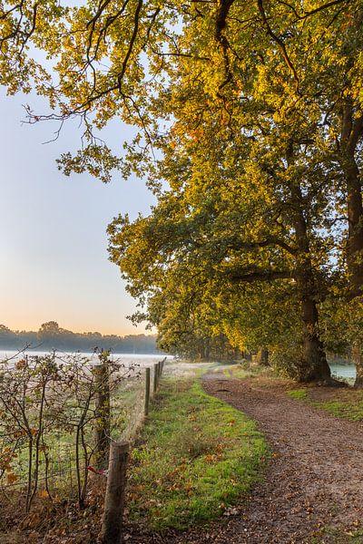 Herfst op Beerschoten van Stephan van Krimpen