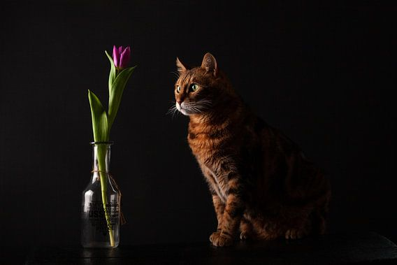 Kat met bloem