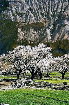 Hunza vallei in Pakistan van Caroline Bomers