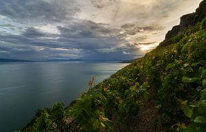 Meer van Geneve, met de wijngaarden van Lavaux.