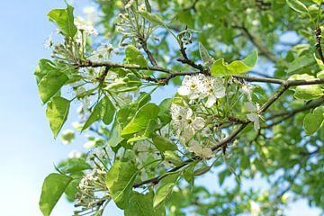 weiße Blüte von Judith Cool