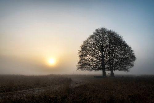 Mysterieuze zonsopkomst Kampina