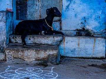 Zwart & Blauw van Tim Ligtvoet