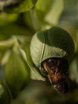 Bijen verstoppertje van Larissa Geuke
