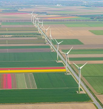 Luchtfoto van bloeiende tulpenvelden tijdens de lente met een rij windmolens van Sjoerd van der Wal