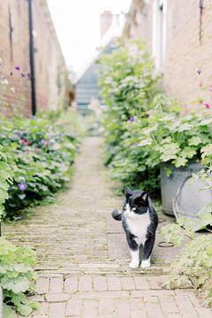 Katze in einer Gasse | Natur- und Tierfotografie in den Niederlanden Fototapeten von Milou van Ham