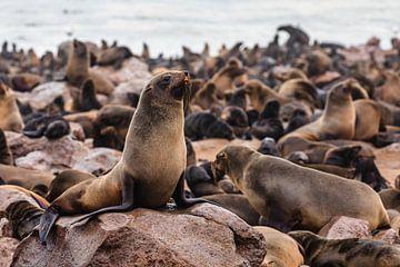 Zeehonden / Pelsrobben bij Cape Cross Seal Reserve, Namibië van Martijn Smeets