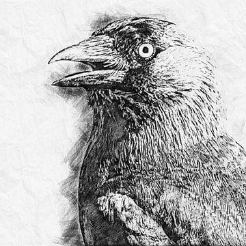 Dohle (Zeichnung) von Art by Jeronimo