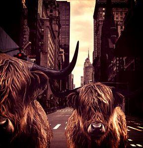 Highlanders in New York