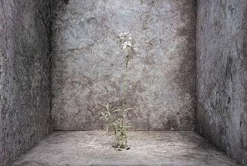 Flower Power van Leonie Kuiper