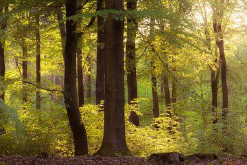 bomen van Tania Perneel