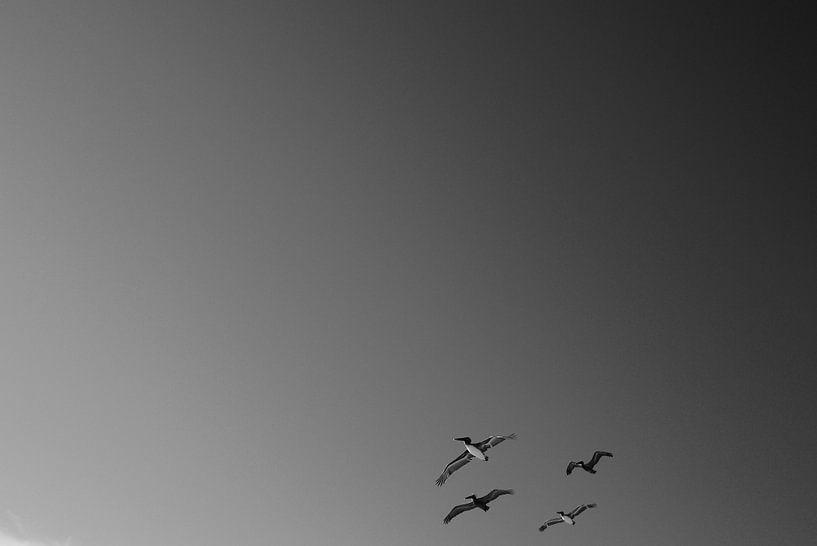 Albatrossen sur erik driessen