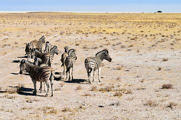 Zebra-Herde von Merijn Loch