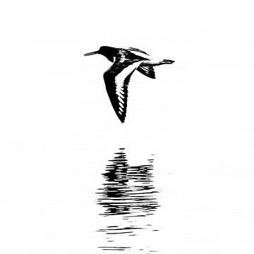 Vliegende scholekster met reflectie (vierkant) van Fotografie Jeronimo