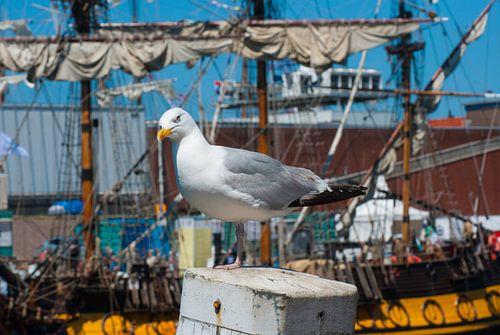 Zeemeeuw in de haven