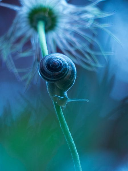 Slak blauw van bird bee flower and tree