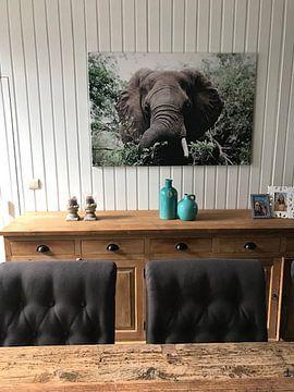 Klantfoto: Afrikaanse Olifant in de Bossen van Krugerpark van Thomas Bartelds