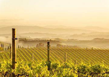 Toscaanse wijngaard in ochtend nevel van Tony Buijse
