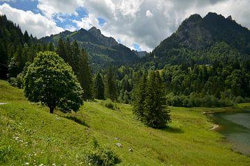 Sommer in den Bergen van zwergl 0611