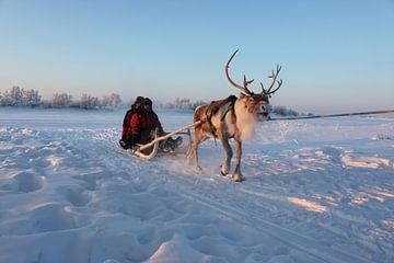 Traditionele transport in Zweeds Lapland van Erik Verbeeck