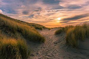 Pad in de zeeuwse duinen van