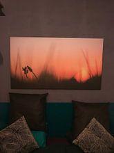 Klantfoto: Bandheidelibel bij zonsopkomst van Erik Veldkamp, op canvas