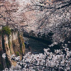 Japanische Sakura-Blüte an einem Kanal in Tokio von Michiel Dros