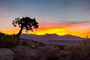 Eenzame boom in Utah