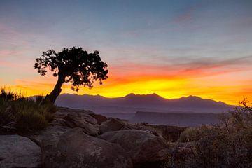 Eenzame boom in Utah van Jonathan Vandevoorde